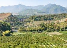 Organic orange farm Stock Image