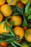 Organic oranges. A basket full of Organic oranges Royalty Free Stock Photography