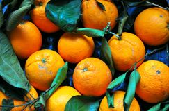 Organic oranges Royalty Free Stock Photography