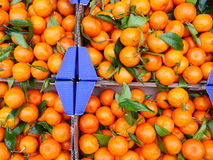 Organic oranges with leaves Stock Photography