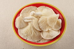 Organic Oyster mushroom in bowl Royalty Free Stock Images