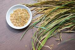 Organic Paddy Seeds, Rice on wood background, healthy f royalty free stock photos
