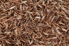 Organic Palmarosa (Cymbopogon martinii) seeds. Stock Photo
