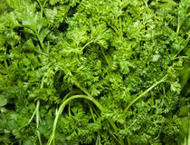 Organic Parsley Royalty Free Stock Image