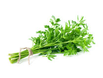 Organic parsley Stock Images