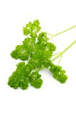 Organic Parsley Stock Image