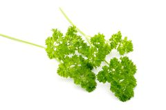 Organic Parsley Royalty Free Stock Photo