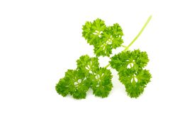 Organic Parsley Stock Photos