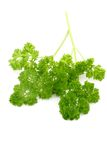 Organic Parsley Royalty Free Stock Images