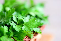 Organic parsley leaves. Rich source of flavonoid and antioxidants, folic acid, vitamin K, vitamin C and vitamin A. Raw nutrition Stock Photo