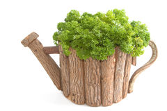 Organic parsley in wooden pot Royalty Free Stock Image