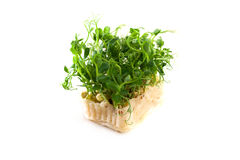 Organic pea sprouts in white background Stock Photo