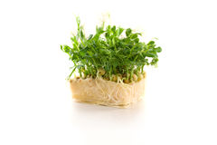 Organic pea sprouts in white background Royalty Free Stock Photography