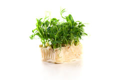 Organic pea sprouts in white background Royalty Free Stock Images