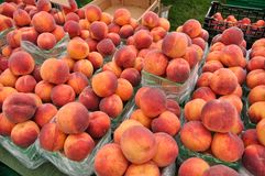 Organic peaches Stock Images