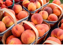 Organic Peaches Royalty Free Stock Image