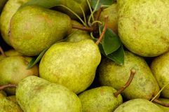 Organic Pears. A group of homegrown natural organic pears Stock Photo