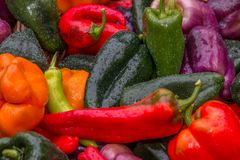 Colorful organic peppers. Organic peppers for sale at farmers market Royalty Free Stock Image