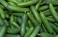 Organic Persian Cucumbers stock photo