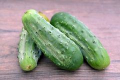Organic pickle. Ripe fresh organic pickle cucumber on rustic table Royalty Free Stock Photos