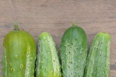 Organic pickle. Ripe fresh organic pickle cucumber on rustic table Stock Photography