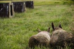 Organic pigs Stock Photo