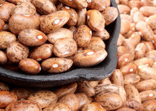 Organic pinto beans Stock Images