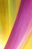 Organic Plant Background Royalty Free Stock Photography