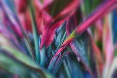 Organic plant texture Stock Photo
