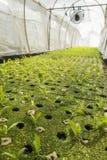 Organic plantation farm Stock Photos