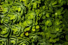 Organic plants of top view Royalty Free Stock Photography