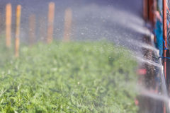Organic plat being watered Stock Images