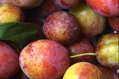 Organic plums Royalty Free Stock Photo