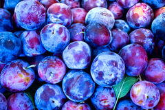 Organic plums - damson Royalty Free Stock Images