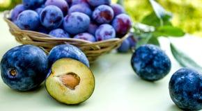 Organic plums - damson Stock Photos