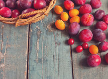Organic plums on the wooden table Stock Photo