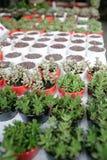 Organic pot gardening Stock Photo