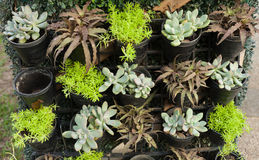 Organic pot little plant and stone roses wall Stock Photography