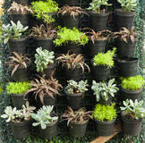 Organic pot little plant and stone roses wall Royalty Free Stock Photo