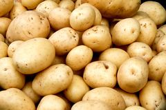 Organic potato Stock Image