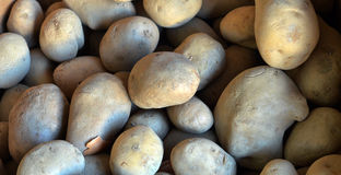Organic potatoe, fresh, Royalty Free Stock Photography