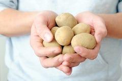Organic Potatoes Royalty Free Stock Images