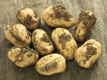 Organic potatoes Stock Images