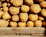 Organic potatoes 3 Stock Image