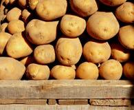 Organic potatoes 3. Organic potatoes on a market stall 3 Stock Image