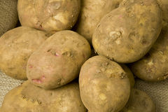 Organic Potatoes. Freshly dug potatoes on a hessian sack-cloth background Royalty Free Stock Images