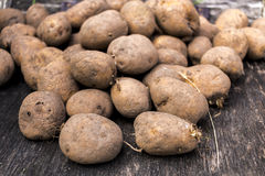 Organic potatoes in bundle. Raw organic potatoes bunch on a wooden textured floor Stock Image