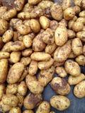 Organic potatoes at farmers market Stock Photo