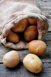 Organic potatoes in natural fur on a wooden table Royalty Free Stock Photography