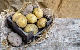 Organic potatoes Stock Photography